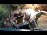 Террариум: змея сбрасывает кожу